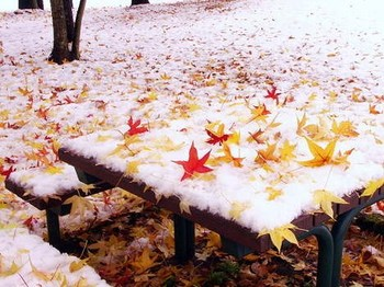 初雪と紅葉.jpg
